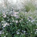 fiori Villa Manin x sito
